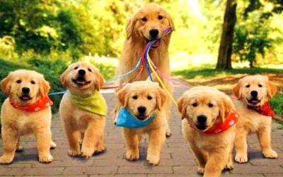Hondenwandeling 14/04/2019